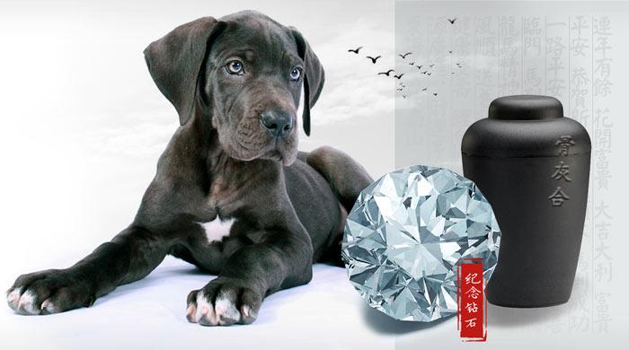 宠物纪念钻石